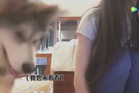 美女主播内衣被狗狗叼走 网友: 这狗是演员?