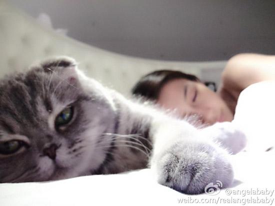 可爱猫举牌照空白素材