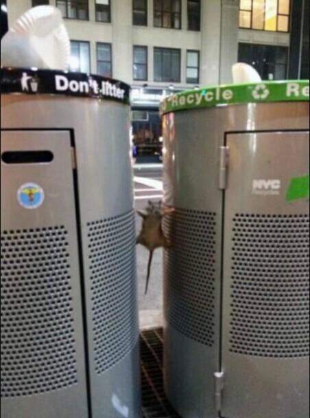 一只老鼠想要爬到垃圾桶里找东西吃